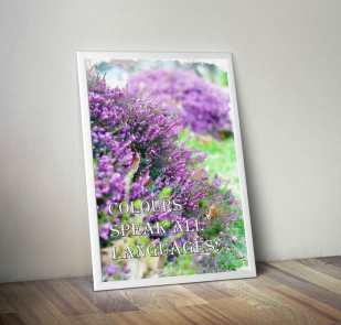 Lavender-bush-on-the-wall