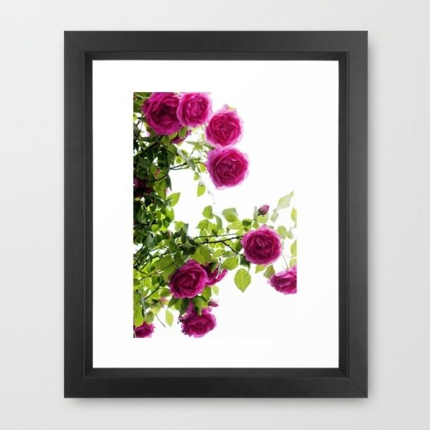 roses-jje-framed-prints